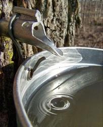 20090414-tree.jpg