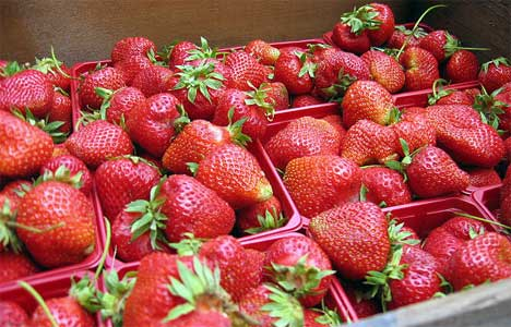 20070618_strawberry-boxes.jpg