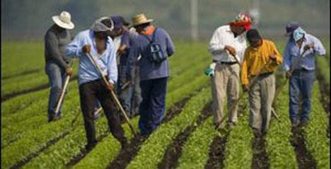 20070620_migrant-workers.jpg