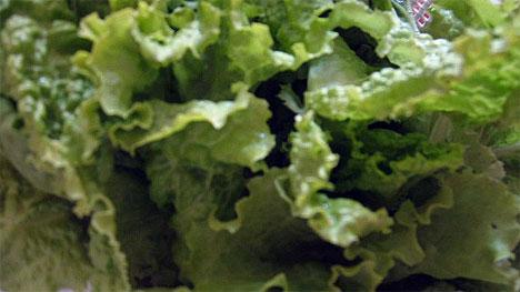 20070627_lettuce-leaves.jpg