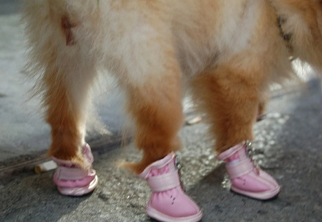 20080225_dogboots.jpg