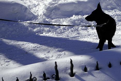 20080304_snowdog.jpg