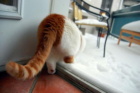 20080313_kittycat.jpg