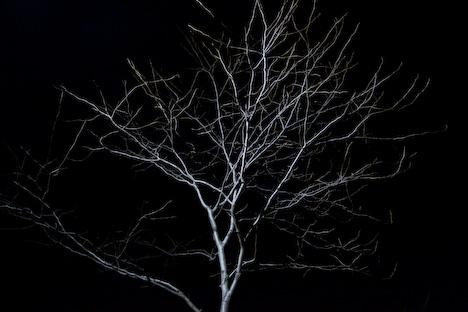 20090220ghosttree.jpg