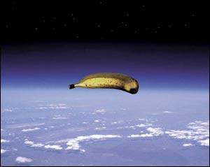 Cesar banana.jpg