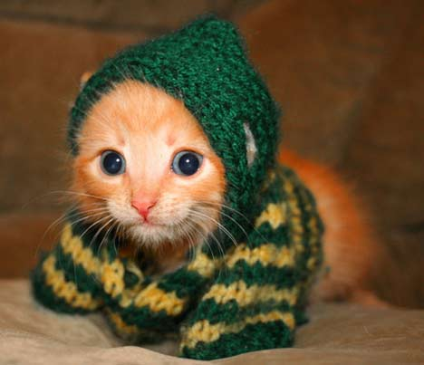 knitted_kitteh.jpg