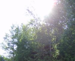sunny-trees.jpg