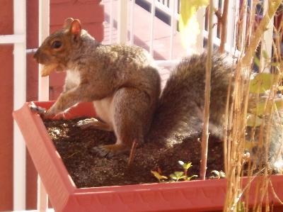 OurSquirrel.jpg