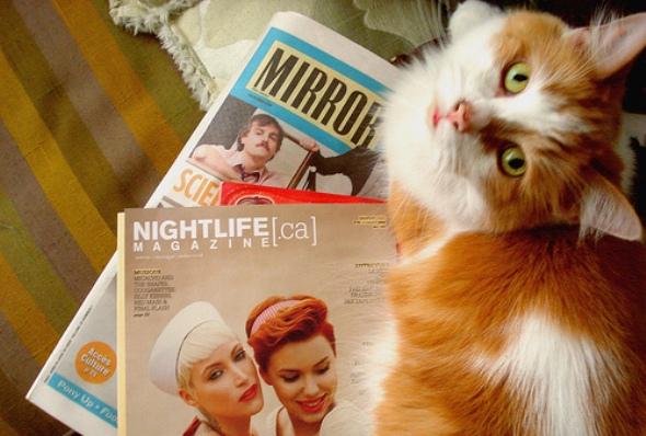 montreal lol cats mirror nightlife