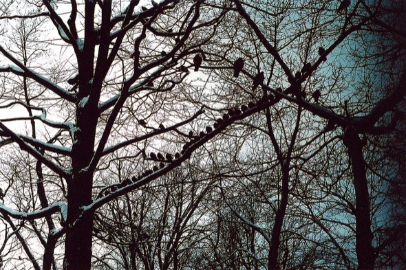 birds,trees,song,day,park,sky,chatter,sing,montreal