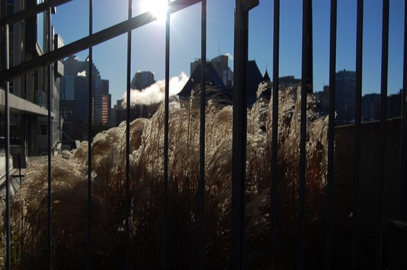 fence,grass,sun,old,montreal,cold