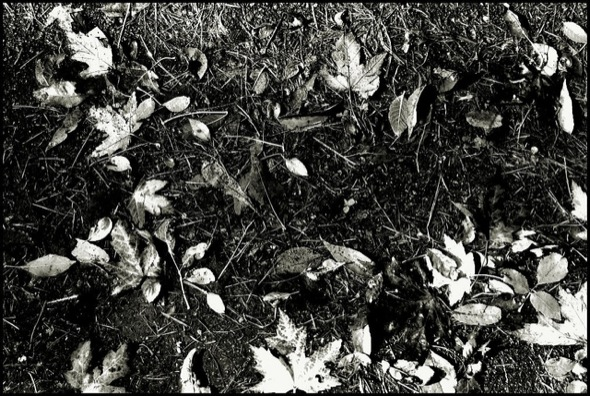 leaves,fall,grass,automne,spring,feuilles
