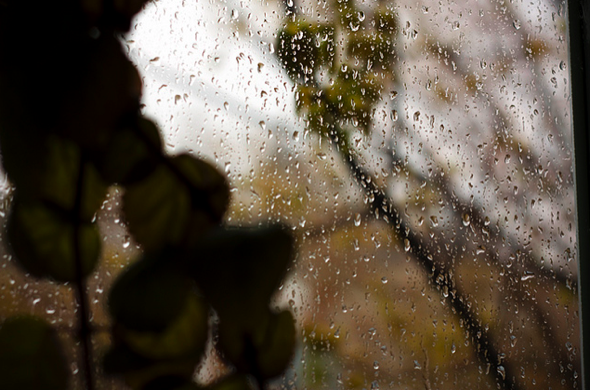 rain,chocolate,plant,window,cold,wind