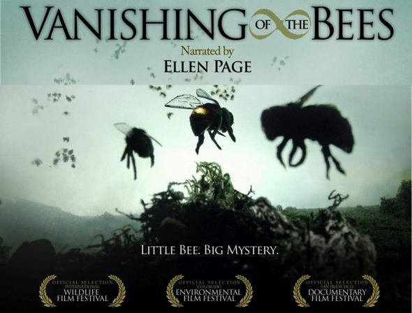 The Case Of The Vanishing Bees