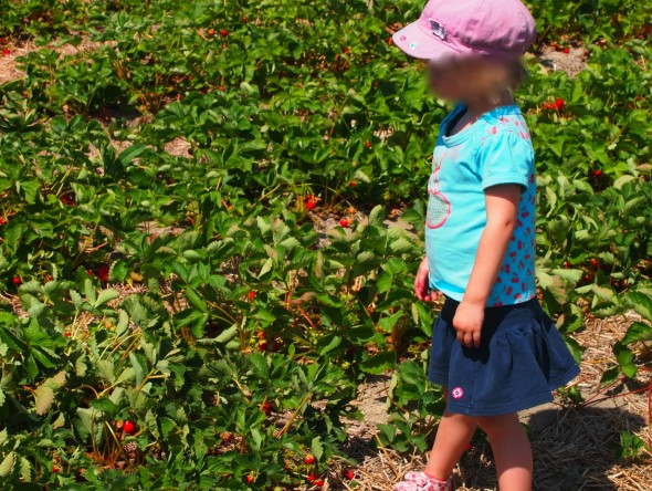 kid-strawberry-picking-l'anse-au-sable-quebec